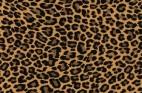 ヒョウ柄・フリーテクスチャ(Leopard02)