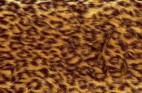 ヒョウ柄・フリーテクスチャ(Leopard04)