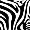 シマウマ・フリーテクスチャ(Zebra02)