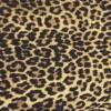 ヒョウ柄・フリーテクスチャ(Leopard01)